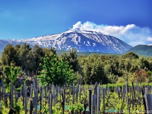 Des vignes au pied de l'Etna