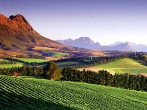 La route des vins du Cap